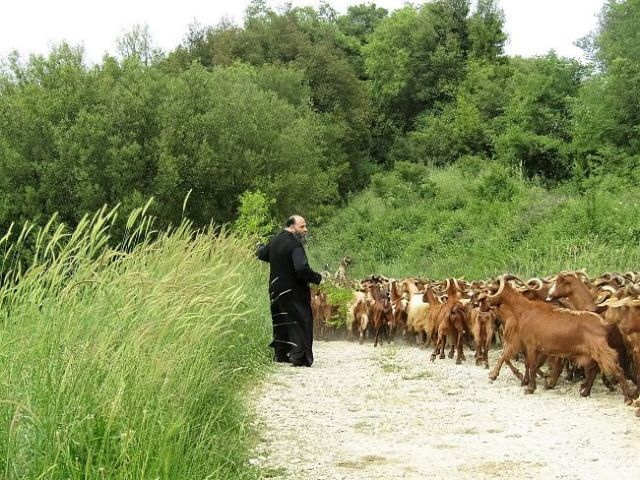 Οι «νεοσύλλεκτοι» της Ιεραρχίας φρεσκάρουν την Εκκλησία | tanea.gr