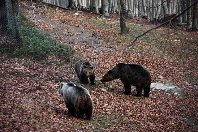 Οι αρκούδες ξύπνησαν - ήρθε η άνοιξη | tanea.gr
