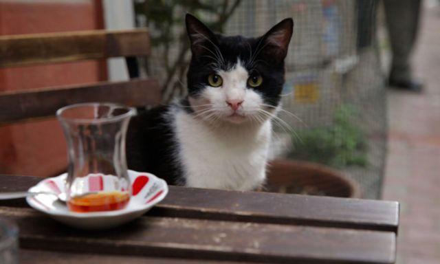 Οι γάτες ξέρουν ότι δεν είμαστε θεοί | tanea.gr