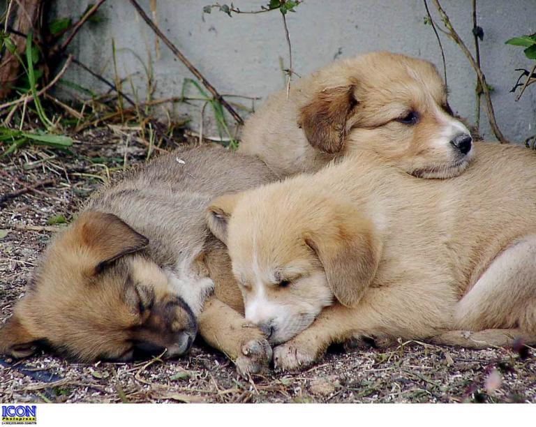 Πυροβόλησαν και σκότωσαν τρία αδέσποτα σκυλιά στο Λαύριο | tanea.gr