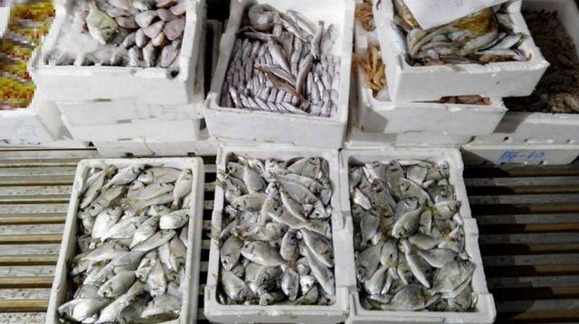 Νέα Μηχανιώνα: Κατασχέθηκαν 125 κιλά αλιεύματα | tanea.gr