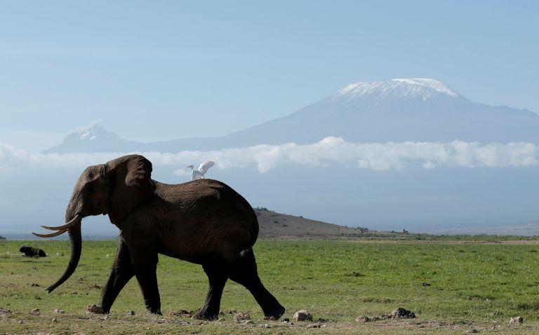 Ελληνίδα ερευνήτρια ρίχνει φως στο DNA των ελεφάντων | tanea.gr