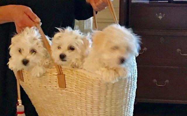 Η Μπάρμπαρα Στρέιζαντ κλωνοποίησε την αγαπημένη σκυλίτσα της | tanea.gr
