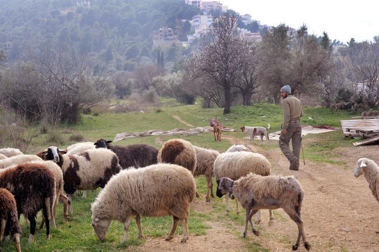 Στο πόδι η Μυτιλήνη για τον κτηνοτρόφο | tanea.gr