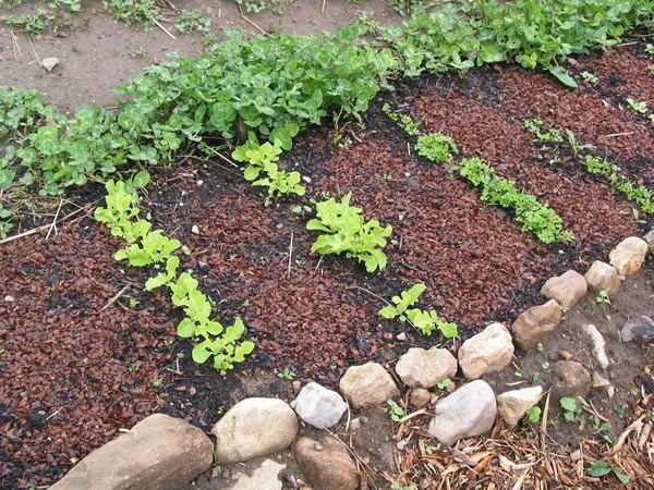 Θεσσαλονίκη: Φτιάξε το δικό σου λαχανόκηπο με τη στήριξη του ΑΠΘ | tanea.gr