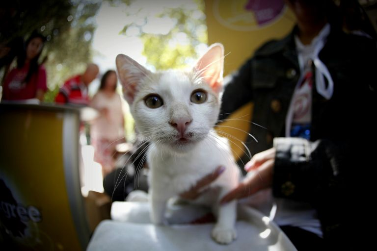 Hugely controversial law on household pets, strays put on hold | tanea.gr
