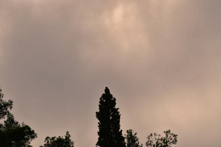 «Σαχάρα» η Κύπρος : Η αφρικανική σκόνη καλύπτει το νησί | tanea.gr