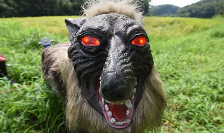 Εφτιαξαν ρομπότ – λύκους για να φοβίζουν τα ζώα | tanea.gr