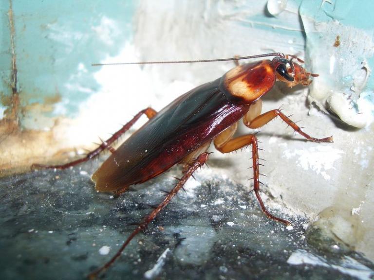 Βρέθηκαν τα γονίδια που κάνουν τις κατσαρίδες «Χαϊλάντερ» | tanea.gr