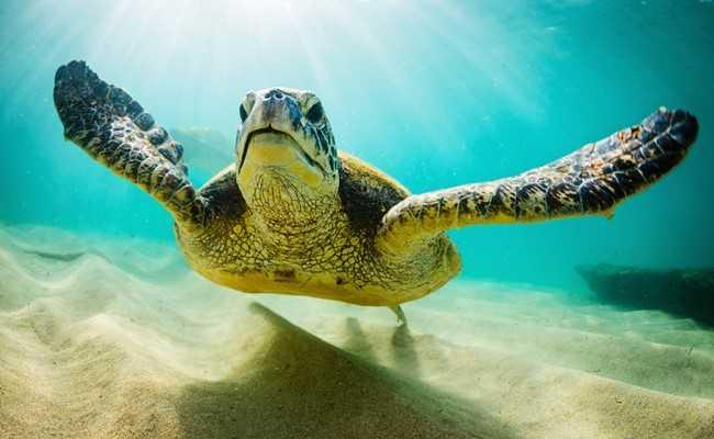 Οι θαλάσσιες χελώνες ξέρουν καράτε! | tanea.gr