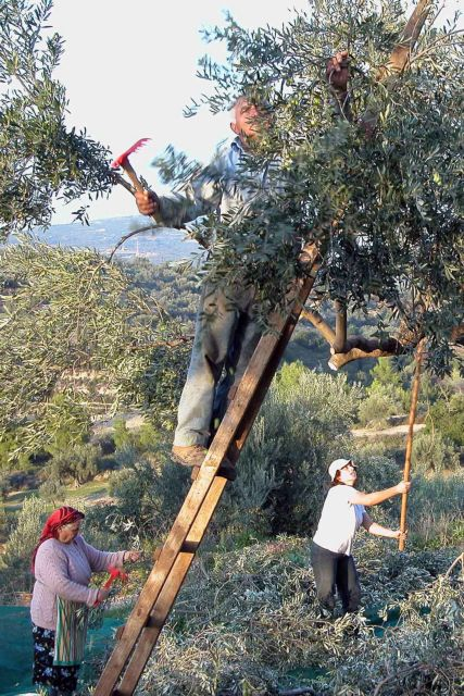 Συντάξεις: Κούρεμα 60% για όσους έχουν αγροτικά εισοδήματα | tanea.gr