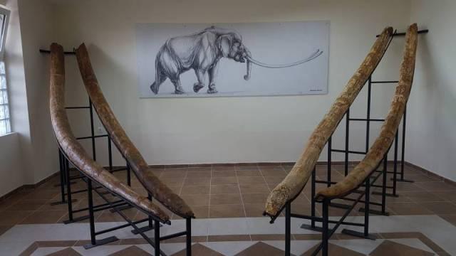 Κυνήγι μαμούθ και ελεφάντων στα Γρεβενά   tanea.gr