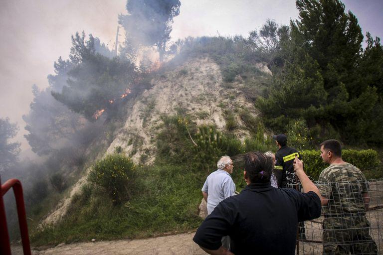 Σοβαρές ζημιές σε ελαιόδεντρα από τις πυρκαγιές στην Ηλεία   tanea.gr