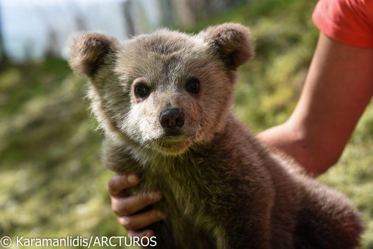 Αρκουδάκι με έφεση στο …ποδόσφαιρο περιέθαλψε ο «Αρκτούρος» | tanea.gr