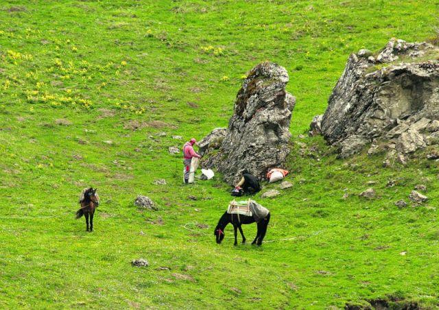 Οι «κυνηγοί» βοτάνων θερίζουν τον Γράμμο! | tanea.gr