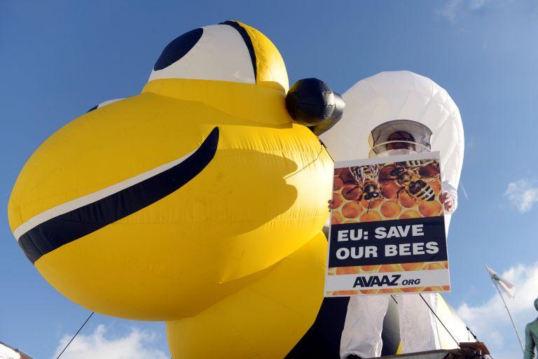 Η ΕΕ απαγορεύει εντομοκτόνα για την προστασία των μελλισών | tanea.gr