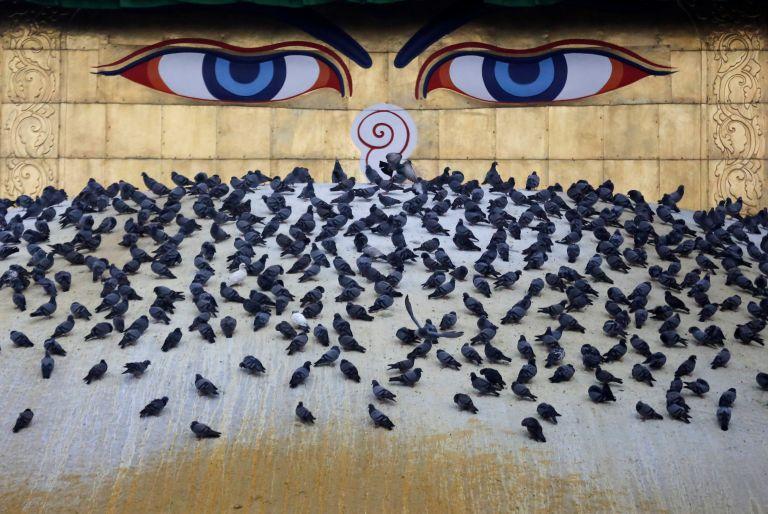 Τα γενέθλια του Βούδα | tanea.gr