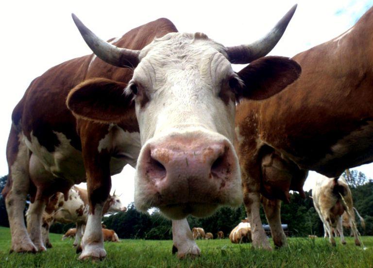 Τα ζώα μειώνουν τον κίνδυνο αλλεργίας και ψυχικών διαταραχών | tanea.gr