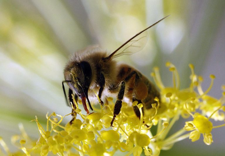 Τραγικός θάνατος: Πέθανε 32χρονος από τσίμπημα μέλισσας | tanea.gr