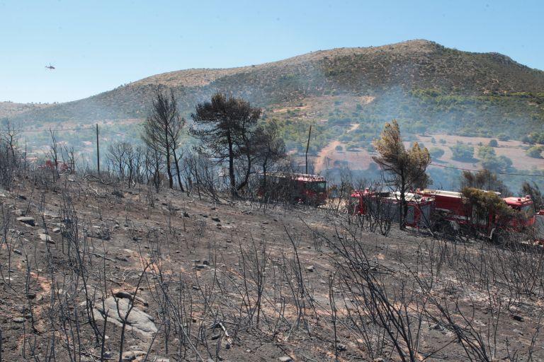 Υπό μερικό έλεγχο η φωτιά στο Σούνιο | tanea.gr