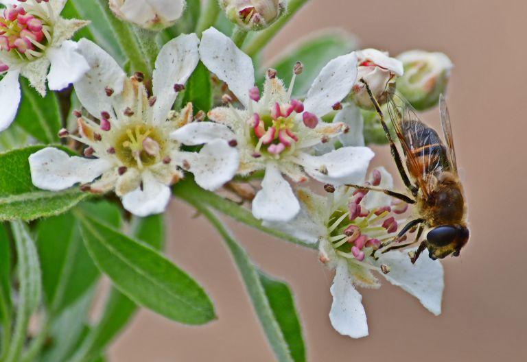 Η μέλισσα ένα από τα πιο δημοφιλή κατοικίδια στη Γερμανία | tanea.gr