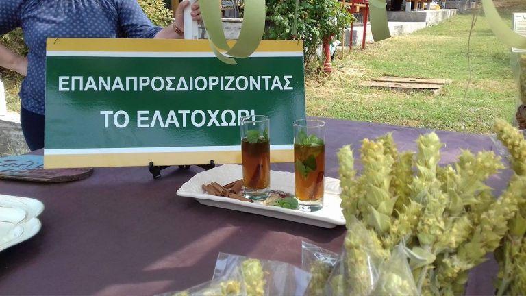 Τσάι Ολύμπου: Το νέο brand για το Ελατοχώρι | tanea.gr