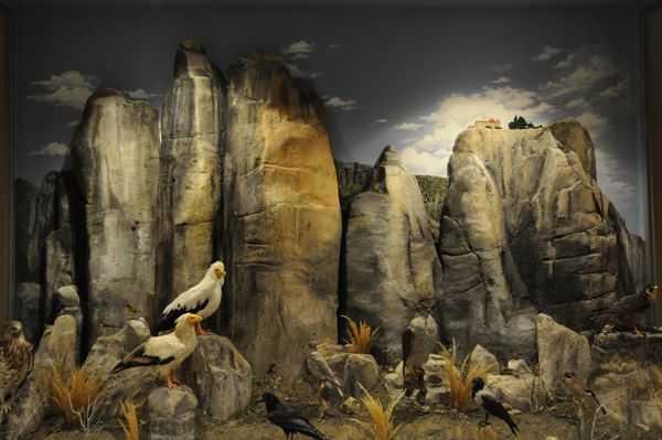 Διάκριση για το Μουσείο Φυσικής Ιστορίας Μετεώρων   tanea.gr