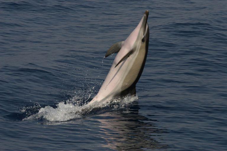 Ελπίδες για επανεμφάνιση του δελφινιού του ποταμού Γιανγκτσέ | tanea.gr