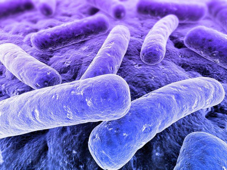 Χαρτογραφήθηκαν οι γενετικοί κώδικες 3.000 επικίνδυνων βακτηρίων | tanea.gr