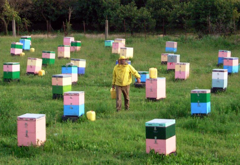 Σάμος: Ηλικιωμένος κατηγορείται για 40 κλοπές μελισσιών   tanea.gr