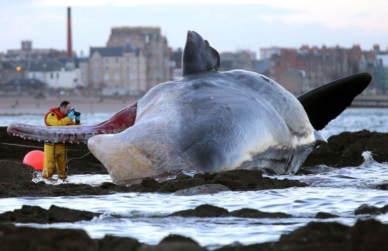 Εκλεισαν παραλία υπό το φόβο έκρηξης… φάλαινας | tanea.gr