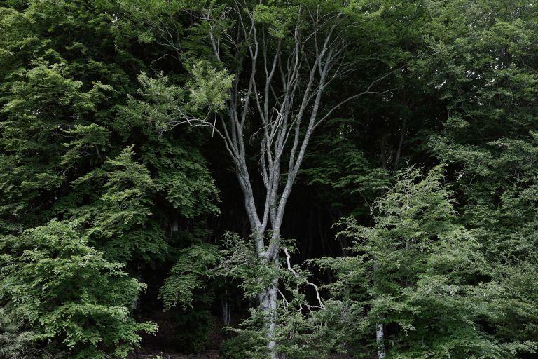 H ρύπανση πλήττει τους μύκητες που τρέφουν τα δέντρα στην Ευρώπη | tanea.gr