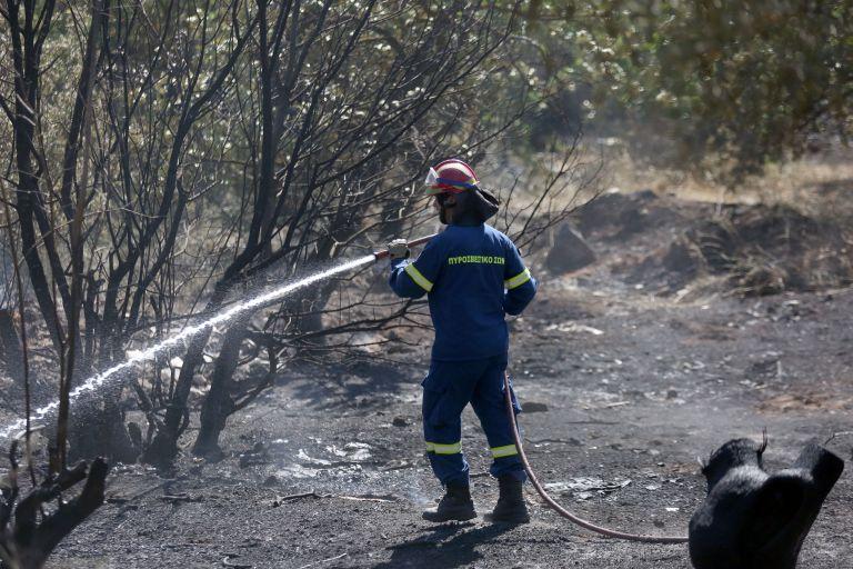 Πυρκαγιά ξέσπασε στα Πολιτικά Ευβοίας   tanea.gr