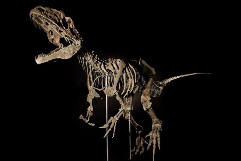 Μυστηριώδης σκελετός διενοσαύρου πουλήθηκε 2,3 εκατ. δολ. σε δημοπρασία | tanea.gr
