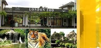 Με γρανίτες δρόσισαν τους γορίλες του Ζωολογικού Κήπου του Λονδίνου   tanea.gr