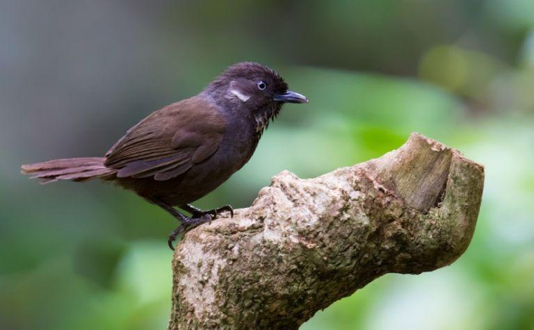 Σπάνια πουλιά έφεραν την ευημερία στο Νονγκάνγκ στη Νότια Κίνα | tanea.gr