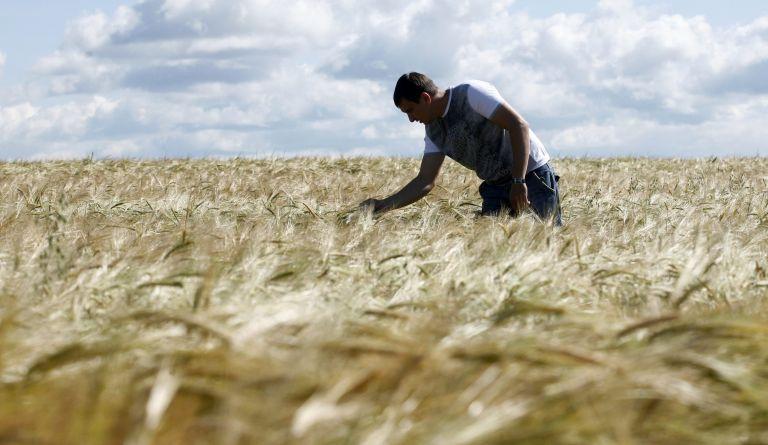 Στους 54 εκατ. τόνους οι ρωσικές εξαγωγές σιτηρών | tanea.gr