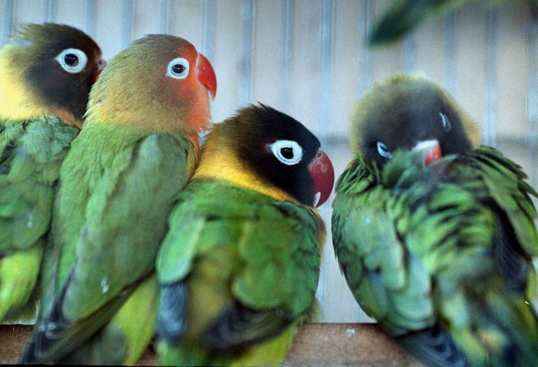 Πύθωνες, έναν βόα και χιλιάδες πουλιά κατάσχεσε η Interpol | tanea.gr
