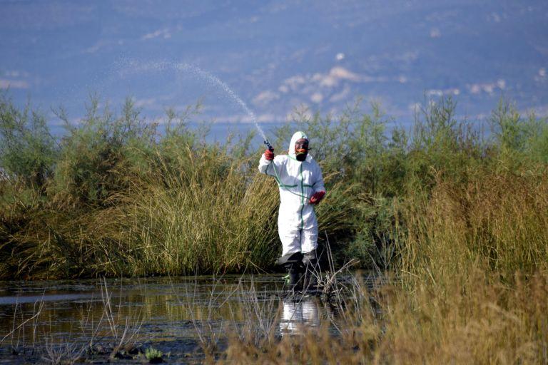 Συνεχίζονται οι ψεκασμοί για τον ιό του Δυτικού Νείλου | tanea.gr