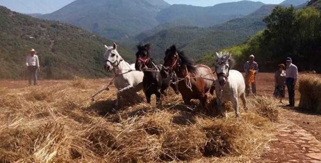Το παραδοσιακό αλώνισμα με άλογα αναβιώνει με διήμερο εκδηλώσεων στην Καρύταινα | tanea.gr