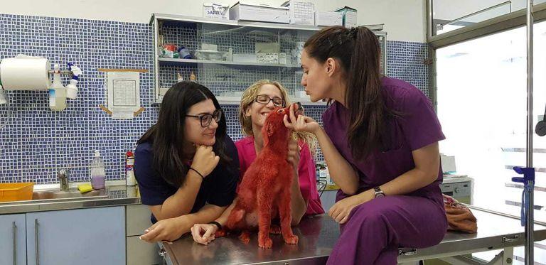 Υιοθετήθηκε η Σκάρλετ, το σκυλάκι που είχε βρεθεί βαμμένο με κόκκινη μπογιά | tanea.gr