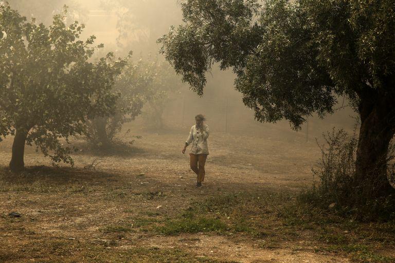 Σε εξέλιξη πυρκαγιά σε πευκοδάσος στην Αλεξανδρούπολη   tanea.gr