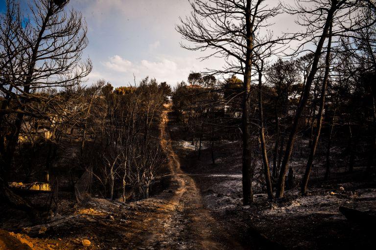 Πρόγραμμα ενίσχυσης από τον ΕΤΕπ για την αντιμετώπιση δασικών πυρκαγιών | tanea.gr
