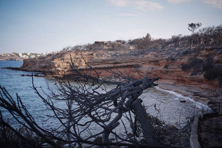 Πυρκαγιές : Αβάσταχτος ο πόνος για την οικογένεια Φύτρου που ξεκληρίστηκε   tanea.gr