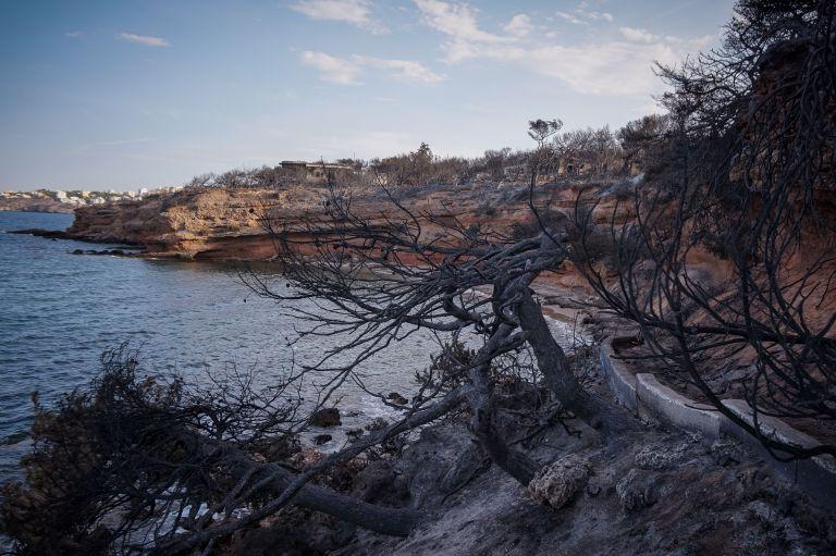 Πυροσβέστες: Ηταν συγκλονιστικό αυτό που είδαμε στο χωράφι με τους 25 νεκρούς | tanea.gr