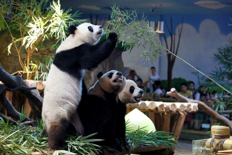 Κίνα: Γεννήθηκαν δίδυμα Πάντα από γονείς που ζουν… χωριστά | tanea.gr