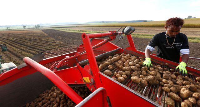 Η μεγάλη της πατάτας κρίση | tanea.gr