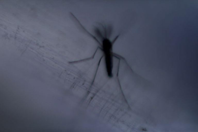 ΙΣΑ: Απροστάτευτη η Αττική από τον ιό του Δυτικού Νείλου | tanea.gr