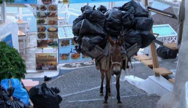 Ομπρέλα προστασίας για τα γαϊδουράκια της Σαντορίνης | tanea.gr