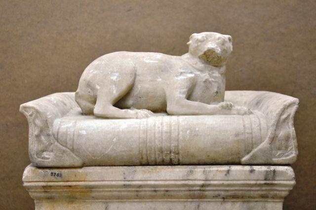 Ενα σκυλάκι ξεμυτίζει από τις αποθήκες του Αρχαιολογικού Μουσείου | tanea.gr